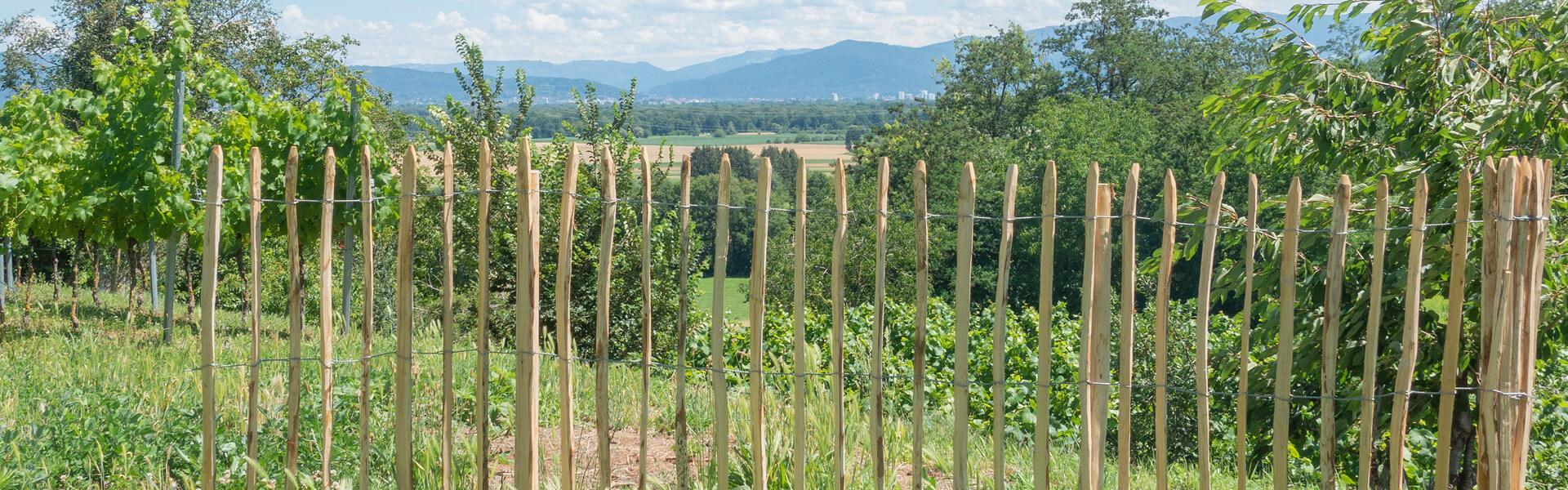 Staketenzaun als Sichtschutz im Garten