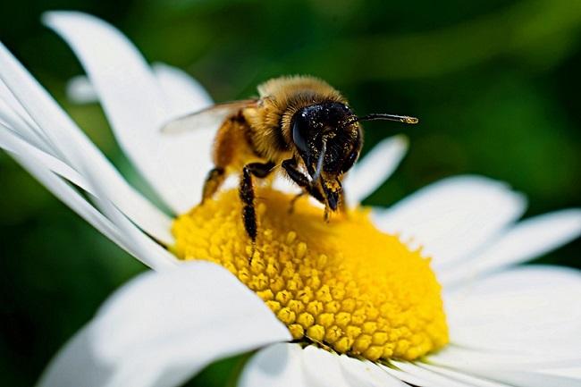 Blühwiese für Bienen, natur-zaun