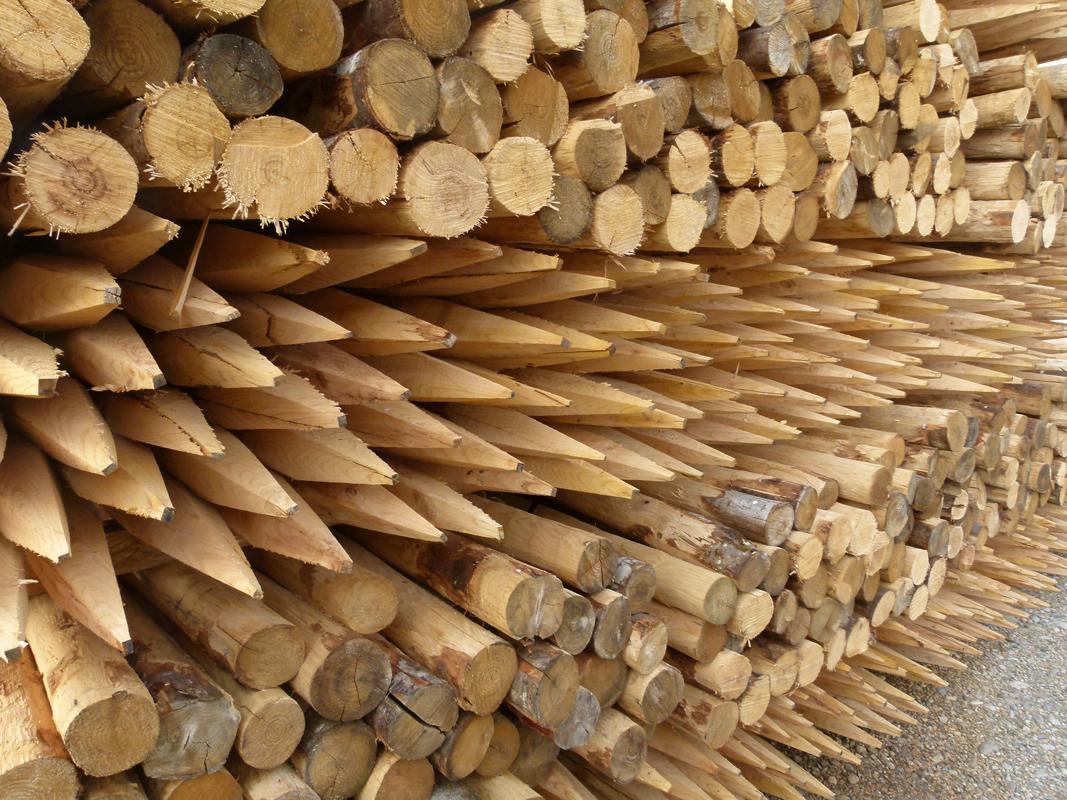 Pfähle aus Kastanienholz angespitzt, ideal für den Aufbau eines Staketenzauns.