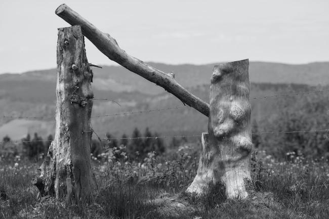 Zaun aus Baumstämmen